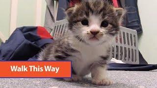 Kitten Learning To Walk