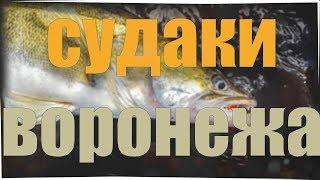 ЭТО СУДАК?? В Воронеже! Ловля рыбы