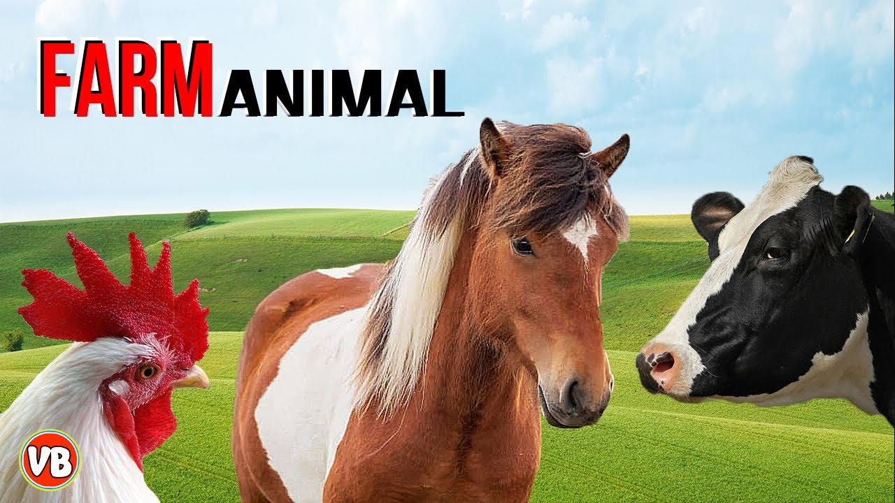 Animais da Fazenda - Nome e som dos Animais da Fazenda