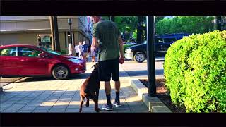 2 Yr Old Doberman, Gambit | Doberman Dog Trainers | Greenville SC Dog Trainers