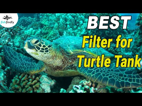 6 Best Filter for Turtle Tank In 2019 – Top Rated Models Reviewed!