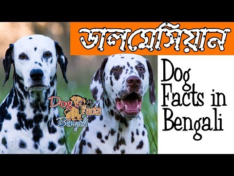 Dalmatian Dog Facts In Bengali | Dog Facts | Popular Dogs | Dog Facts Bengali