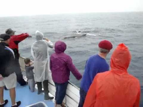 Spencer captures whale-watching excitement