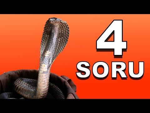 Hint Fakiri Kobrayı Nasıl Oynatır? + 3 İlginç Sorunun Cevabı Daha