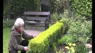 Box Hedge  -  Its Many Uses