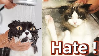 Cats dailyWhen the cat takes a bath,I hate water!Tiktok cats compilation