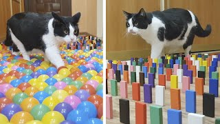 Color Obstacle for the cat Challenge