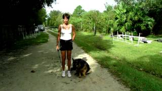 German Shepherd Remy Trained By Her Owner Dogtra E Collar Pager