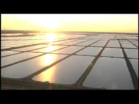 Louisiana -- The Health Risks Of Imports Vs. U.S. Farm-Raised Catfish