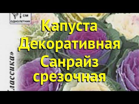 Капуста декоративная. Краткий обзор, описание характеристик brassica oleracea Санрайз срезочная