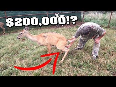 Top 10 Horrible Jobs That Pay Great Money