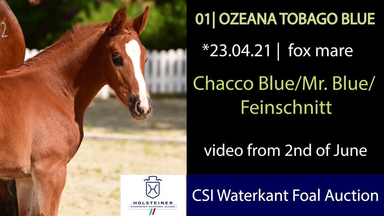 Ozeana Tobago Blue | Holsteiner Verband
