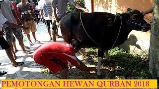 Download Video PROSES PEMOTONGAN HEWAN QURBAN IDUL ADHA 2018 1439H MP3 3GP MP4