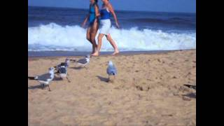 """Scissor Sisters """"Skin This Cat"""" Official Seagull Dance Party Music Video!!!!!"""