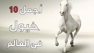 أجمل انواع الخيول فى العالم ؟!