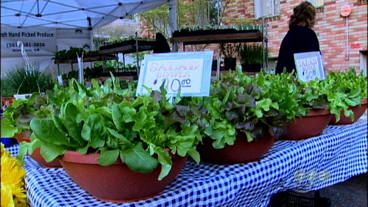Growing lettuce in a pot - Growing Lettuce In A Pot 16
