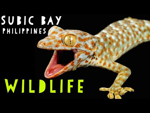 Wildlife in Subic Bay Philippines