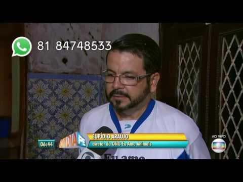 """""""Eu Amo Animais"""" - Elpídio Araujo - Entrevista Bom Dia Pernambuco"""