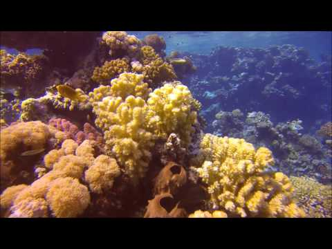 Scuba Diving in Jeddah - Saudi Arabia - Red Sea