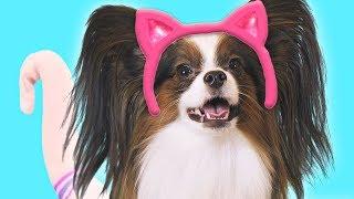 ТАЙНАЯ ЖИЗНЬ домашних животных 2 / Веселый Юки - КОТ / Сериалити от ЮКИ 8 серия