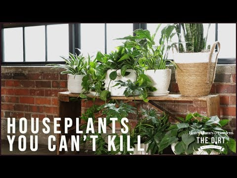 Houseplants You Can't Kill | Gardening & Outdoor Living | Better Homes & Gardens