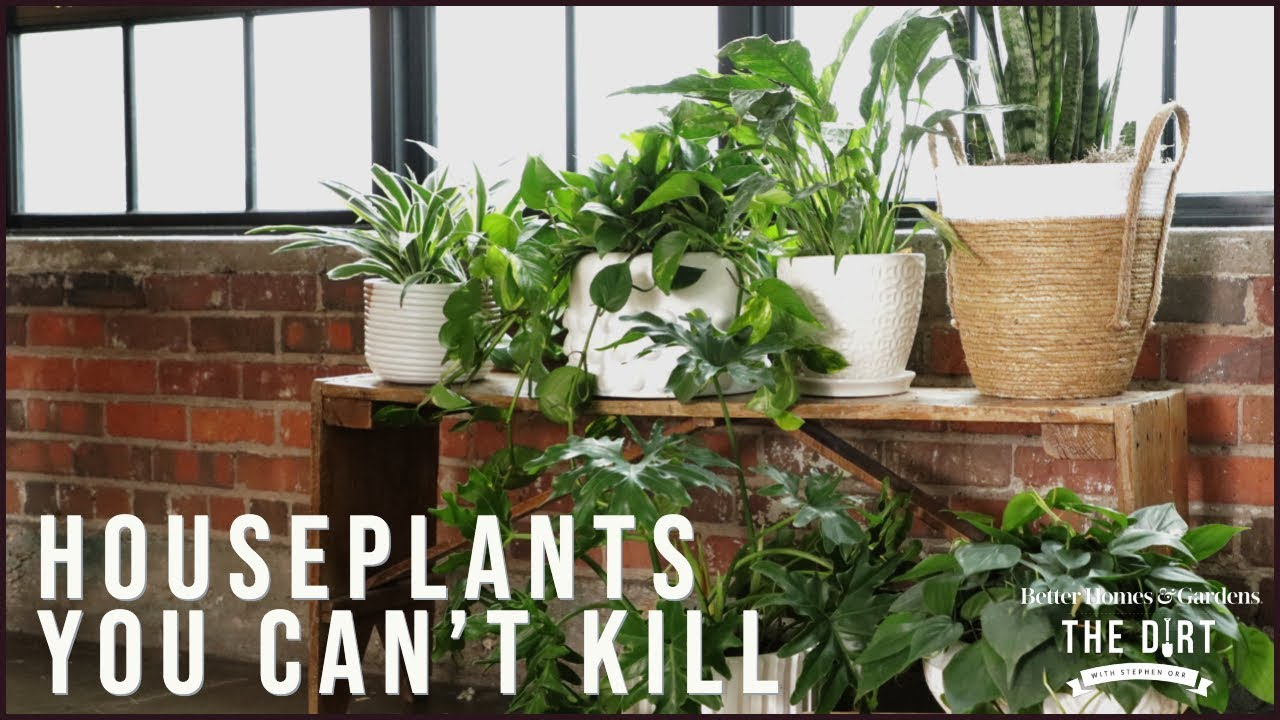 Houseplants You Can't Kill | The Dirt | Better Homes & Gardens on best clean air plants home, air plants for home, good plants books, water plants for home, mint plants for home, good dogs for home, fake plants for home, green plants for home, red plants for home, best plants for home, feng shui plants for home, house plants for home, money plants for home, good plants outdoors, plants in your home, low light plants for home, good plants to grow indoors, lucky plants for home, healthy plants for home,