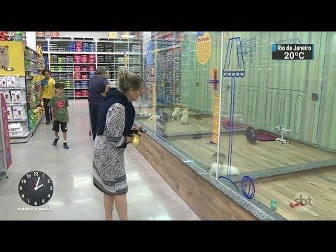 Maioria dos donos não se planeja financeiramente para criar pets | SBT Notícias (07/11/17)