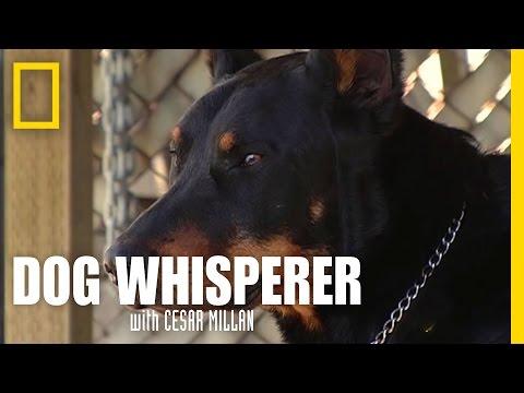 Cesar We Have a Problem | Dog Whisperer