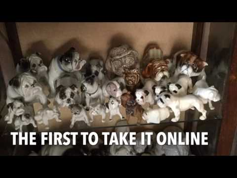 My English bulldog collection in vid format
