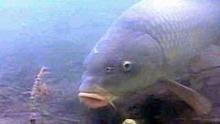 http://genesisbox.pl/ - Twój sklep karpiowy. Fragment filmu nagrany przez naszą ekipę na węgierskim łowisku Szucsi Volgy. Sprawdźcie, co tam się dzieje pod ...