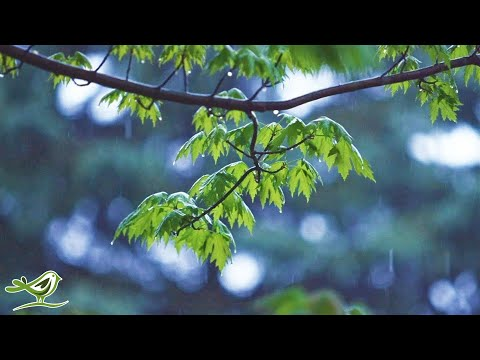 Relaxing Music & Gentle Rain Sounds - Beautiful Piano Music for Relaxation & Sleep