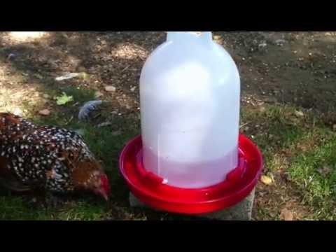 sitzstangen für hühner rund oder eckig
