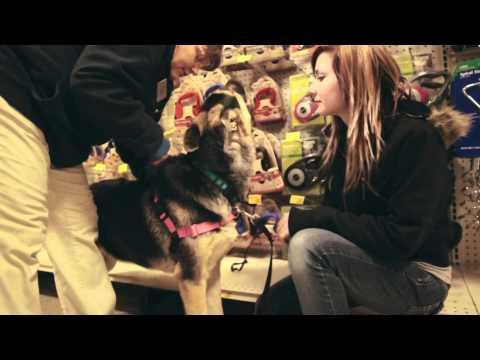 Celia The German Shepherd (Trip to PetSmart)