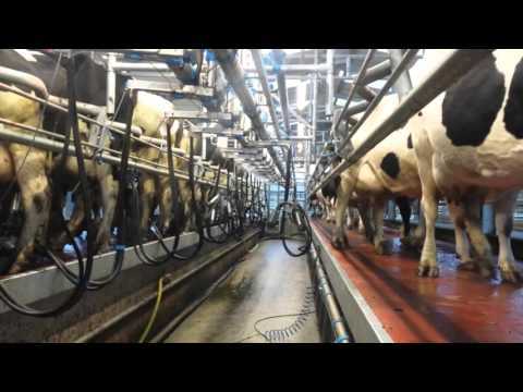 Milking parlour series: Paddy O Gorman, Co Tipperary