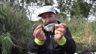 Gunki Grubby Shad video