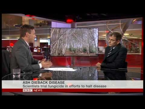 BBC News Channel on ash dieback 19:43PM on 7 OCT 2014