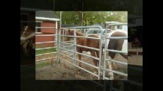Lil Bits Farm!!!!!! Thumbnail