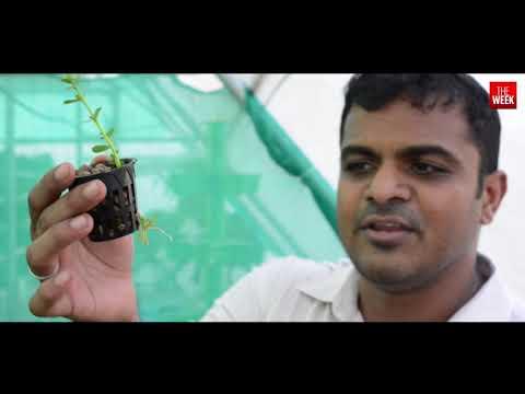 Hydroponics: The Future of Farming