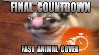 Baixar Europe - Final Countdown (Fast Animal Cover) [done within an hour]