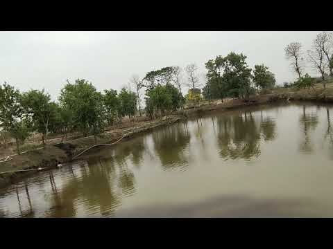 Bio Pond Power (Fish Pond Fertilizer)