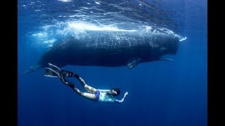 Freediving With Whales In Sri Lanka (HD)