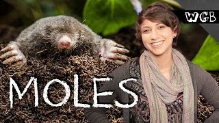 How Do Moles See The World?