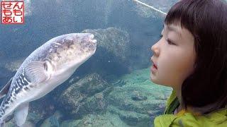 アクアワールド大洗 Aqua World Oarai Aquarium