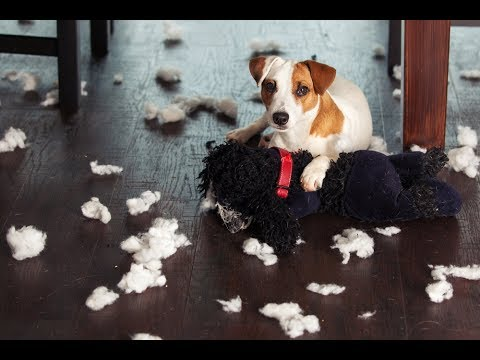 how-to-prevent-your-dog-from-chewing-your-clothes-and-furniture