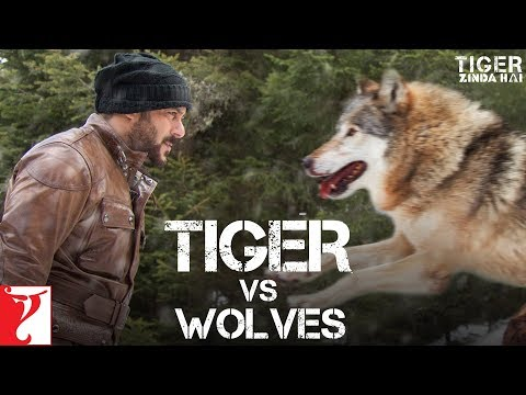 Tiger vs Wolves  - Promo | Tiger Zinda Hai...