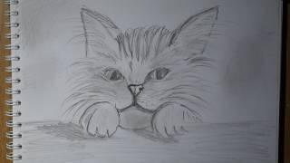 Как нарисовать портрет кота - быстро   рисовать кота просто скетчинг