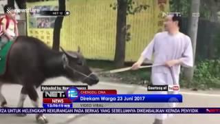 Download Video Aksi Antar Jemput Anak Dengan Keledai - Net 12 MP3 3GP MP4