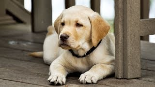 How to Treat Puppy Diarrhea | Puppy Care