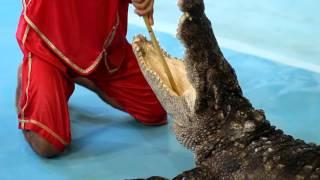 Лазаревское   Шоу с крокодилами