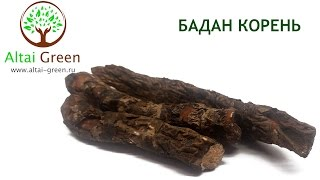 видео Бадан, лечебные свойства и противопоказания